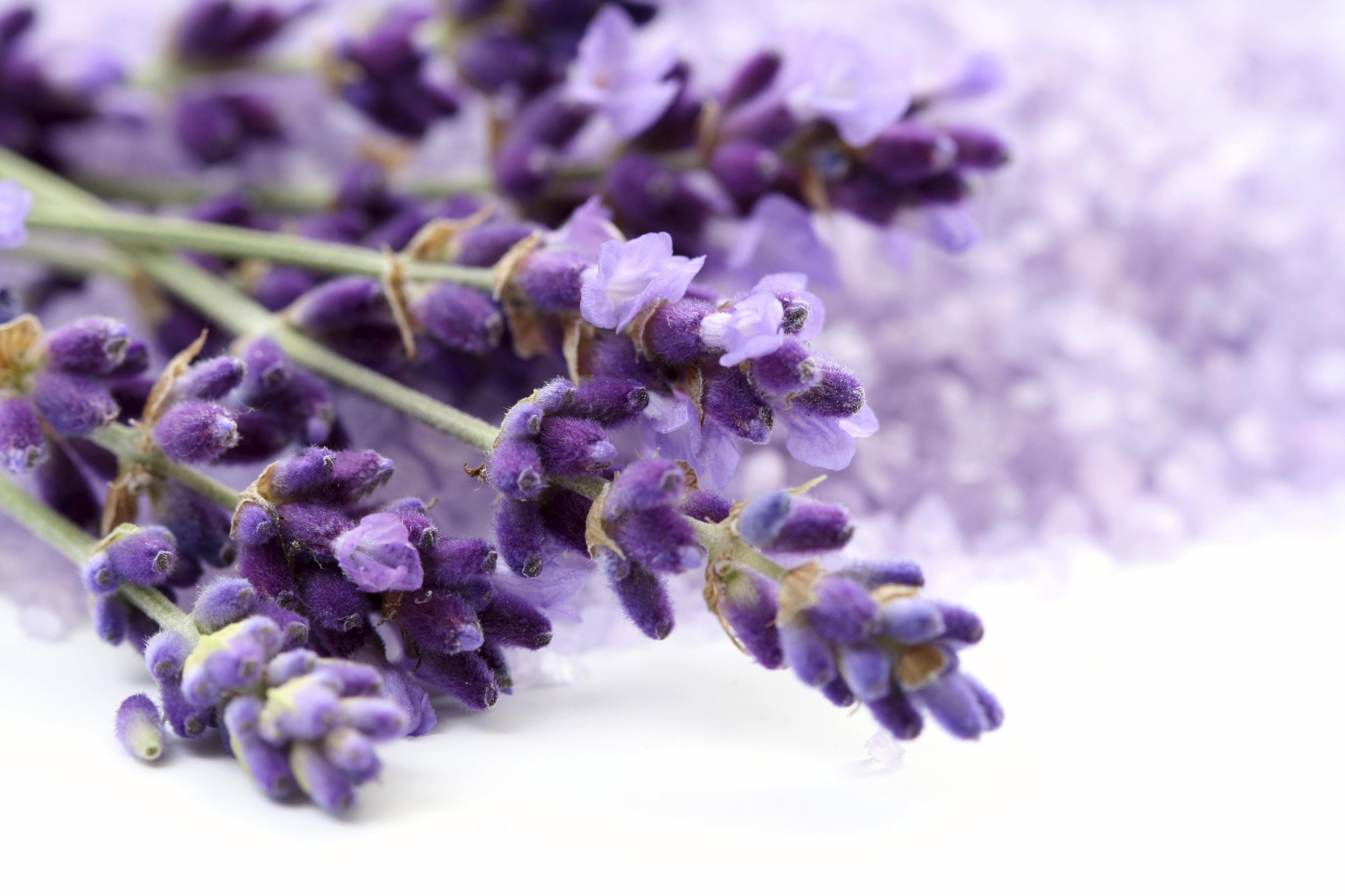 lavender background color - HD3888×2592